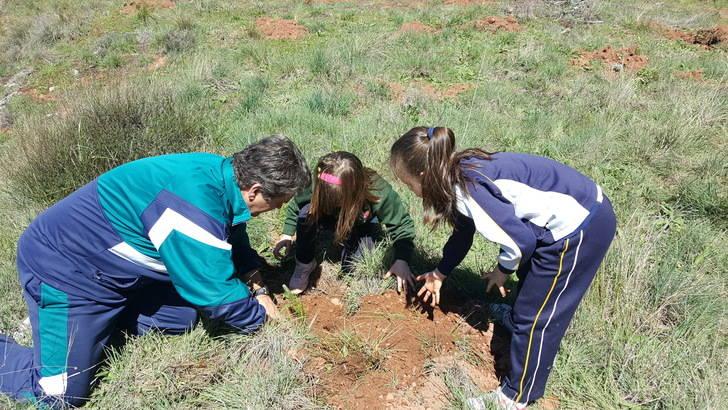 El Día del Arbol seguntino ha tenido caracter didáctico, desarrollado en varias jornadas con los centros escolares
