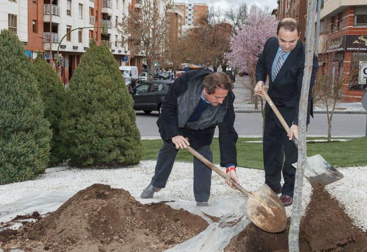 Guadalajara se suma al Día del Árbol, plantando una encina en la glorieta de la Unión Europea