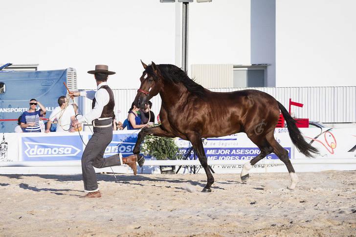 Yunquera de Henares acogerá el Campeonato Morfo-Funcional de Castilla-La Mancha de Pura Raza Española