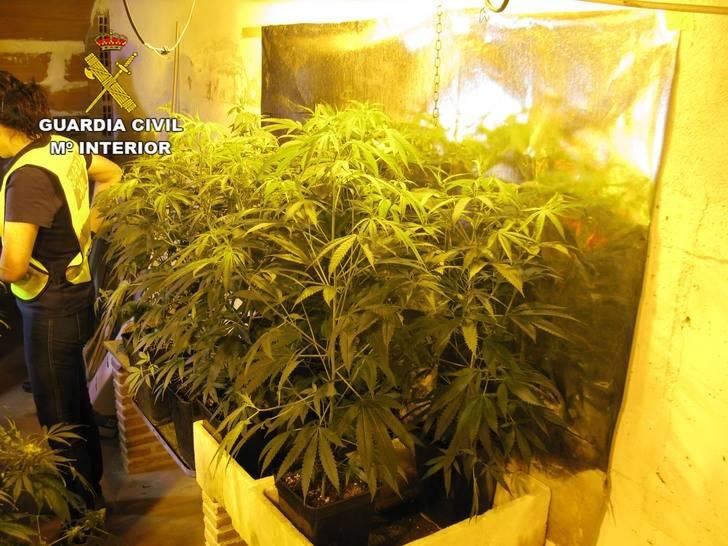 Detienen a una persona en Azuqueca por cultivar marihuana