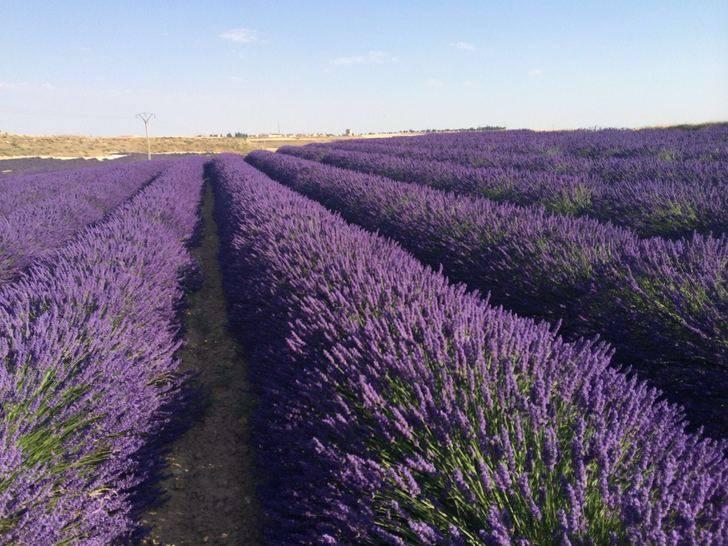 La Diputación convoca una jornada sobre aromáticas en Brihuega