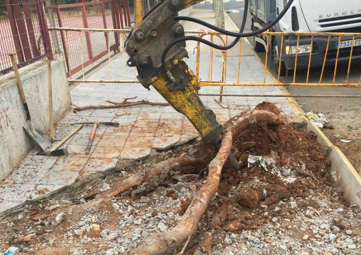 El Ayuntamiento de Villanueva de la Torre retirará los plataneros que tantos problemas causaron a los vecinos