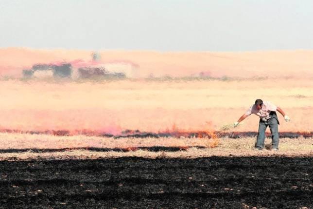 UPA pide a la Junta que autorice la quema controlada de rastrojos para acabar con las plagas