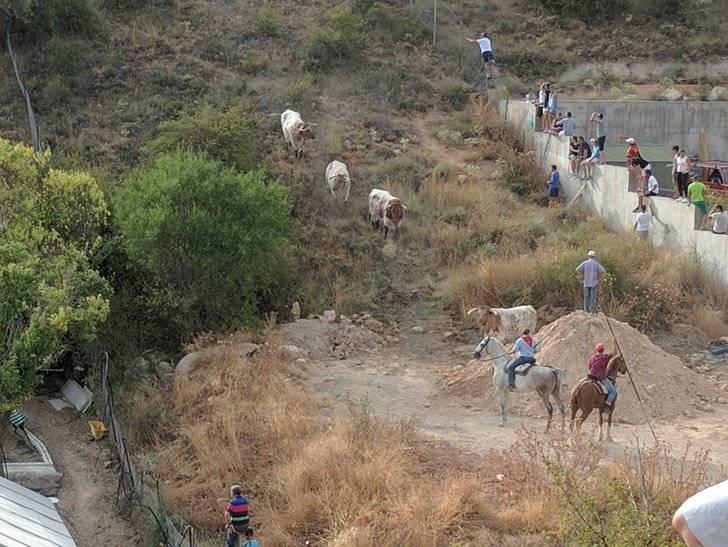 Abatido a tiros el toro del encierro de Brihuega que se adentró en el monte
