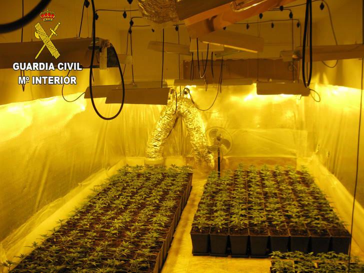Detienen a tres personas en El Casar por cultivar marihuana