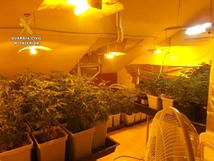 La Guardia Civil de Seseña detiene a una persona e investiga a otra por cultivar 836 plantas de marihuana
