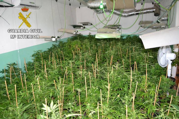 La Guardia Civil incauta 1.027 plantas de marihuana en Fuentenovilla