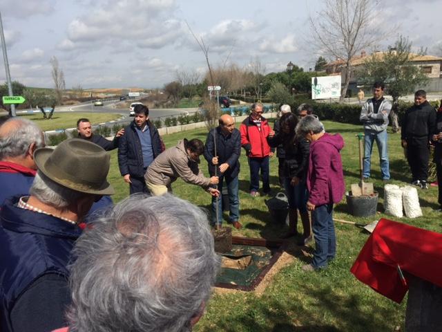 Sánchez-Seco asiste en Torrejón del Rey a la plantación de un olmo libre de grafiosis
