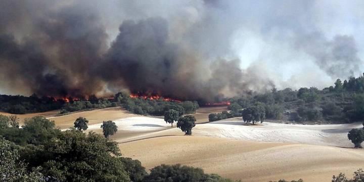 Continúa activo el incendio de Almoguera en el que trabajan 15 medios y 57 personas