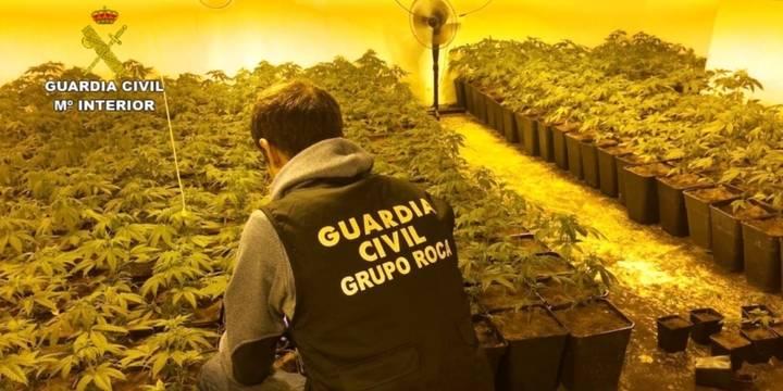 La Guardia Civil detiene a dos personas por cultivar 1.424 plantas de marihuana en una vivienda unifamiliar en Albalate de Zorita