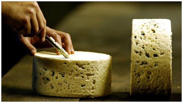 Leche de burra para el queso más caro del mundo: 1.000 euros por kilo