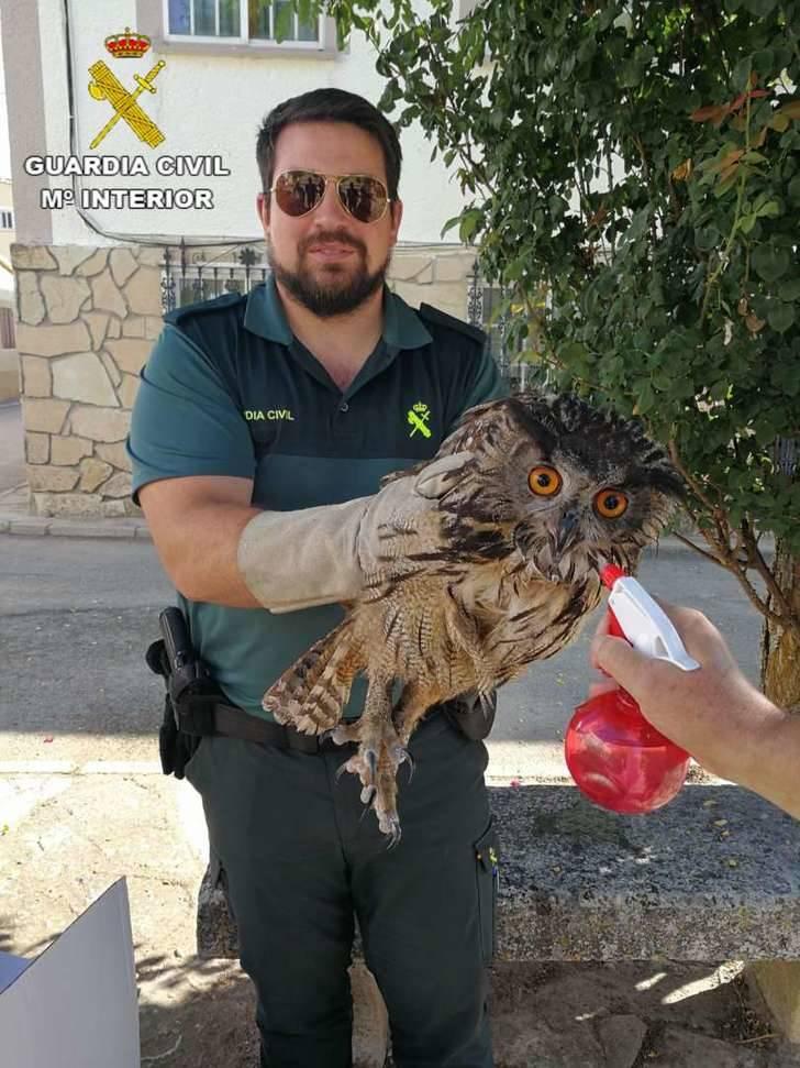 La Guardia Civil recupera un magnífico búho real perdido en la plaza de Sacecorbo