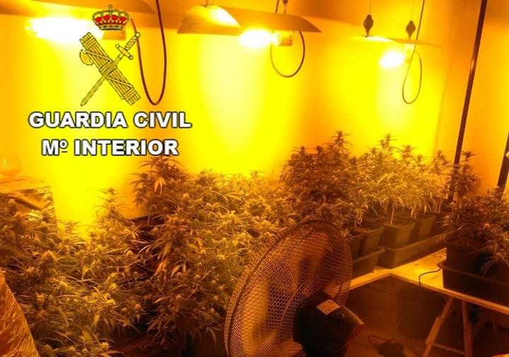 La Guardia Civil 'pilla' en una casa de Pioz 1.318 plantas de marihuana