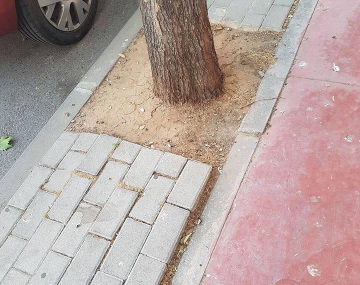 Ciudadanos Azuqueca denuncia el mal estado de las aceras debido al crecimiento de los árboles