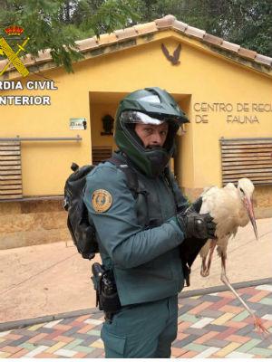 La Guardia Civil de Guadalajara recupera en Cabanillas una Cigüeña Blanca (Ciconia ciconia)