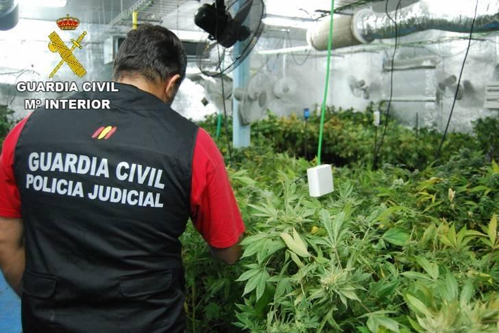 Un detenido en El Casar por cultivar en su casa... ¡3.410 plantas de marihuana!