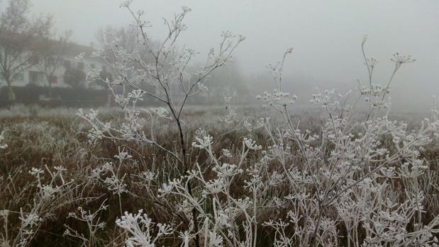 Molina de Aragón y Sigüenza registran unas de las temperaturas más bajas de España : 6ºC bajo cero
