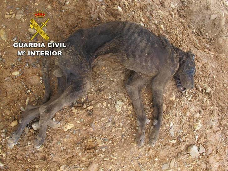 La Guardia Civil investiga la muerte de un perro en El Casar