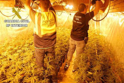 Mazazo de la Guardia Civil a la producción de marihuana en El Casar: 11 detenidos con más de 3.000 plantas