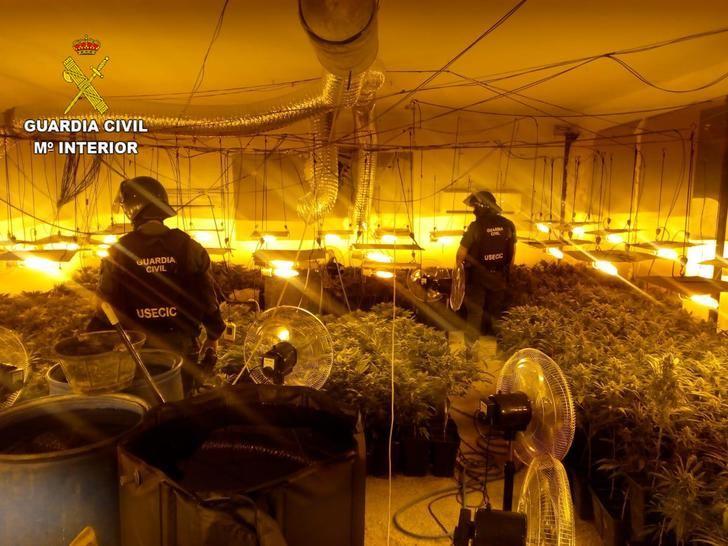 La Guardia Civil desmantela una plantación con más de 1.000 plantas de marihuana en Pioz