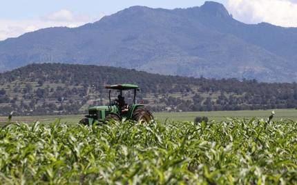 APAG denuncia robos de maíz a agricultores en varias zonas de Guadalajara