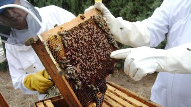 El sector apícola de COAG convoca movilizaciones el 11 de diciembre en Guadalajara