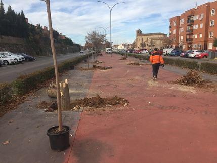 Sustitución de 49 árboles enfermos o secos en la Avenida del Atance de Guadalajara
