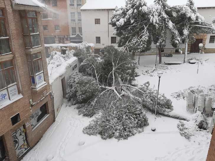 Riesgo extremo en la vía pública por caídas de árboles y desprendimientos de nieve en fachadas y cornisas de Guadalajara capital