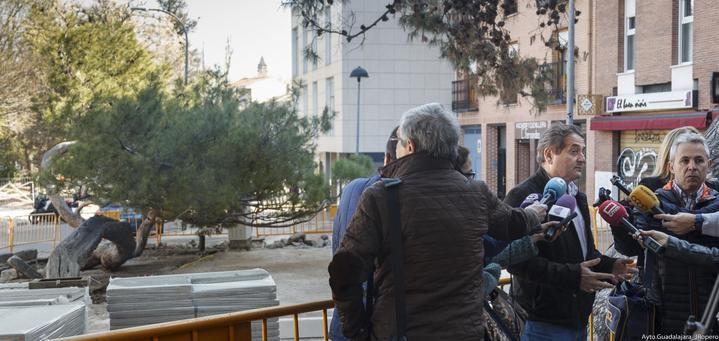 """El Ayuntamiento de Guadalajara pone en valor el """"pino tumbado"""" de la Concordia"""