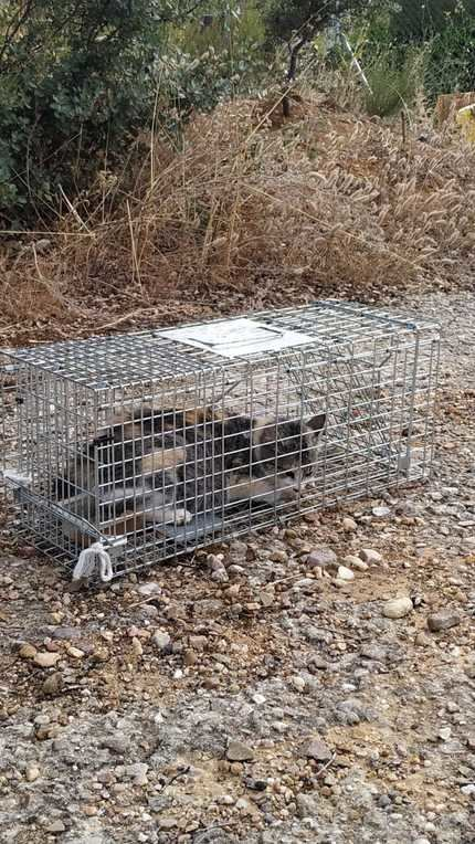 Acoso sistemático a las colonias felinas controladas por la Asociación Protectora de Animales de Sotolargo (APAS)