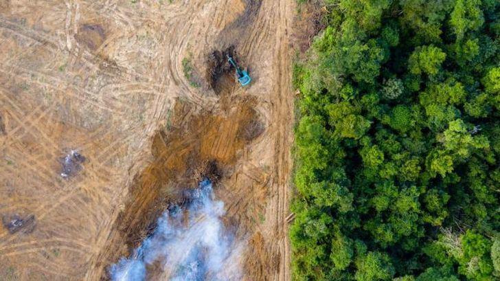 Más de un millón de personas piden una ley europea contra la deforestación
