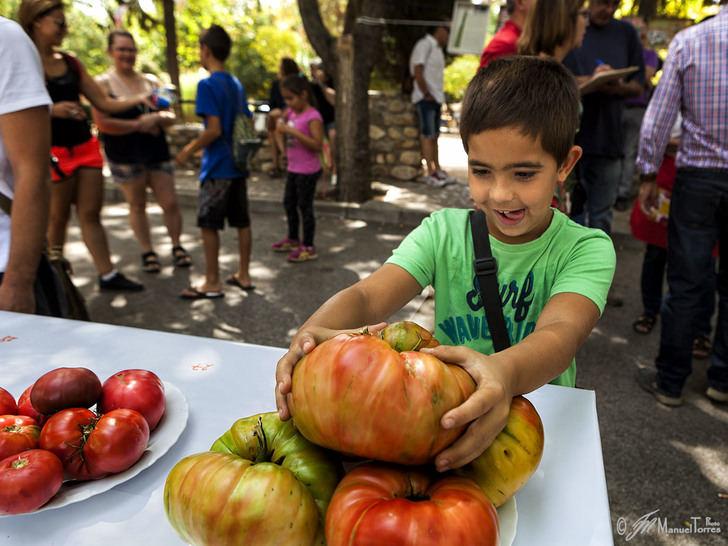 """El próximo 2 de septiembre, se celebra en Fontanar la 4ª edición de la """"Fiesta del Tomate"""""""
