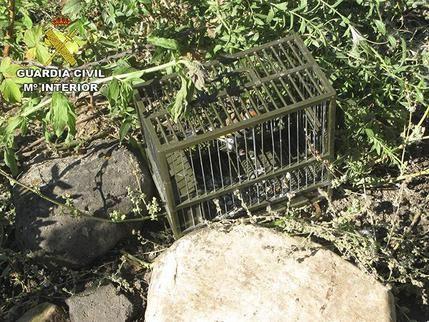 La Guardia Civil de Ciudad Real investiga a una persona por capturar aves fringílidas utilizando métodos prohibidos