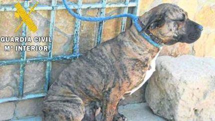 La Guardia Civil inicia una campaña de vigilancia de perros potencialmente peligrosos en distintos municipios de Guadalajara