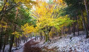 Admitido a trámite el recurso contra el decreto que desprotege el Parque Natural de la Sierra Norte de Guadalajara