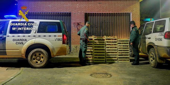 La Guardia Civil incauta más de una tonelada de níscalos en el final de la campaña micológica en Guadalajara