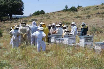 La Asociación de Apicultores de Guadalajara innova en formación con un programa de tutelajes apícolas