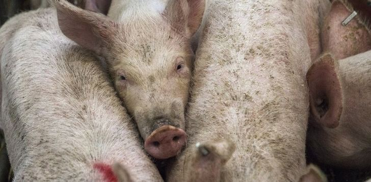 ASAJA alerta que las ayudas que el Ministerio de Agricultura ha anunciado dejarán fuera al 95% de los ganaderos de ovino y caprino de CLM
