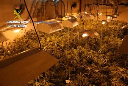 La Guardia Civil desmantela cuatro plantaciones de marihuana en Alcaudete de la Jara