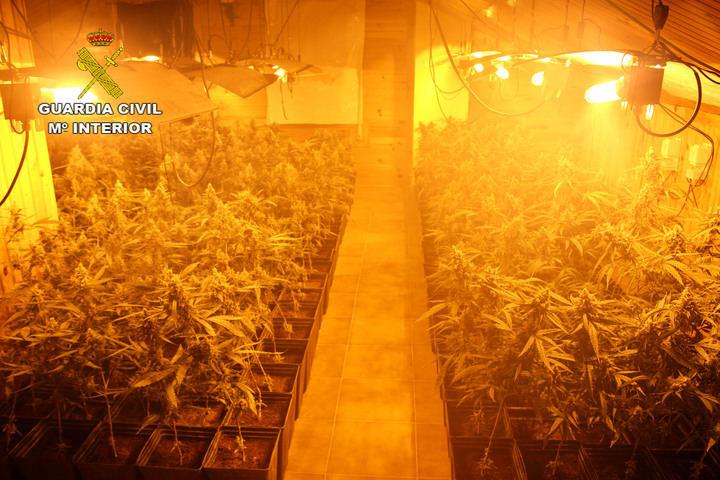 La Guardia Civil detiene a una persona por cultivar 1.648 plantas de marihuana en Almadrones