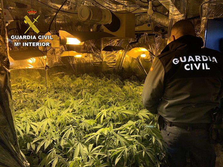 La Guardia Civil desmantela una plantación de marihuana en Hontoba