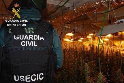 La Guardia Civil detiene a dos personas por cultivar 797 plantas de marihuana en Pioz