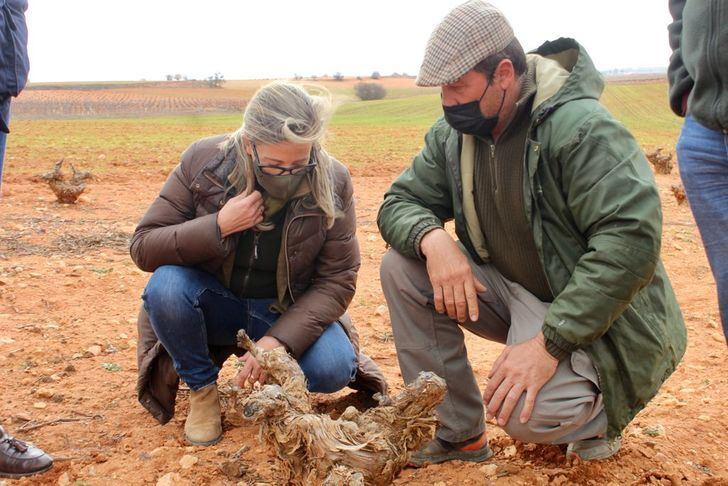"""Merino denuncia que """"los conejos se están comiendo la renta de los agricultores"""" ante la falta de medidas de Page"""