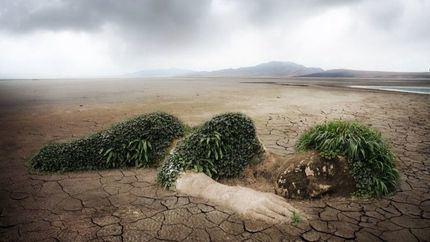 Un centenar de organizaciones exigen a los gobiernos un 'mundo positivo' para la naturaleza para 2030