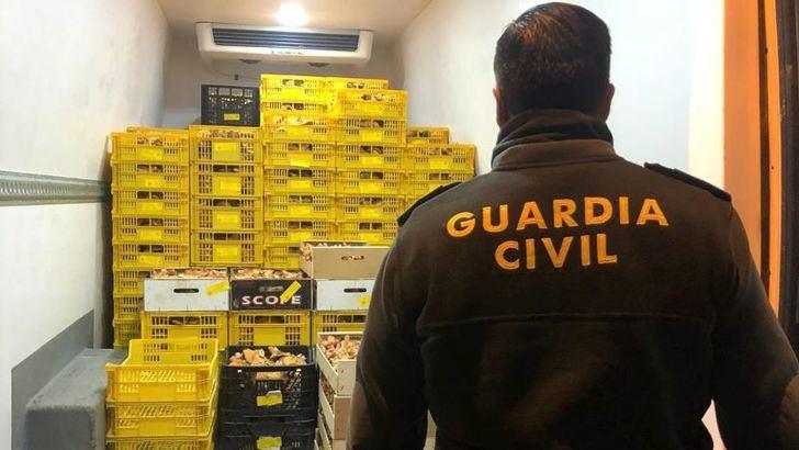Incautada una tonelada de níscalos recogidos ilegalmente en Alcolea del Pinar