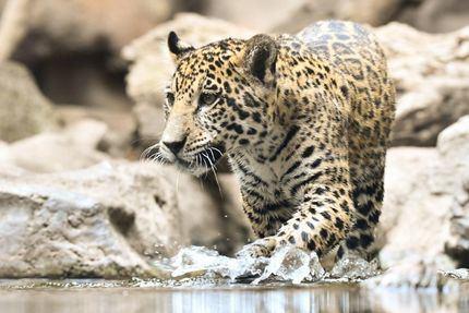 Los animales de Loro Parque dan la bienvenida al verano