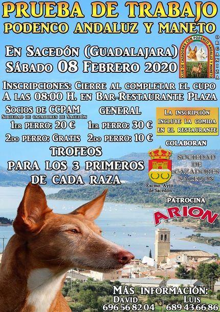 Exhibición de podencos andaluces y manetos en Sacedón, este sábado