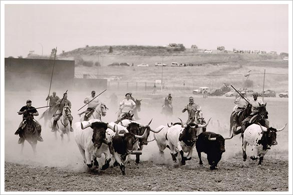 'Apretando la manada', vencedora del 14º Concurso de Fotografía de ToroAlcarria