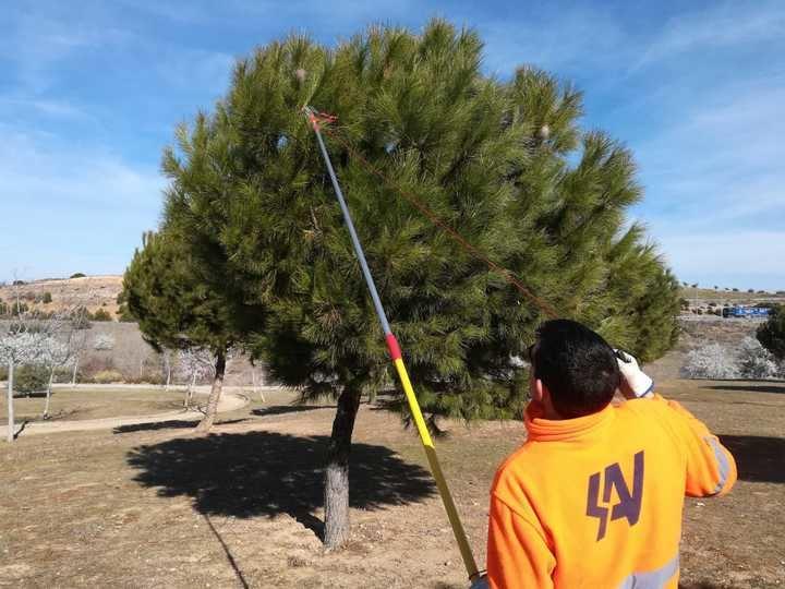 La Concejalía de Medio Ambiente de Guadalajara refuerza las actuaciones contra la procesionaria del pino