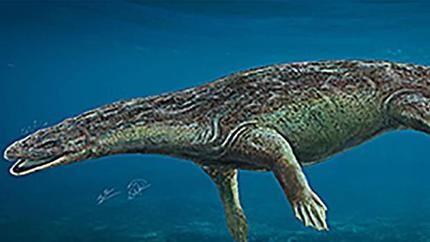 Descubren un reptil que vivió en el pantano El Atance de Sigüenza hace 230 millones de años